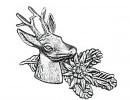 Odznak srnec hlavaOdznak srnec hlava